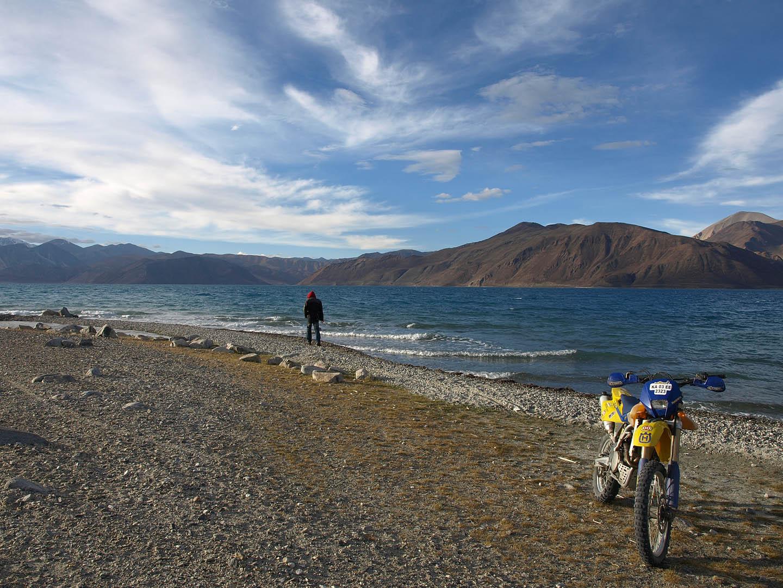 PangongTso Lake and the husky